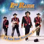 Play & Download La Raza Anda Acelerada by Los Razos   Napster