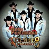 Rosa Perfumada - Single by Colmillo Norteno