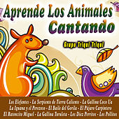 Play & Download Aprende los Animales Cantando by Grupo Triqui Triqui | Napster