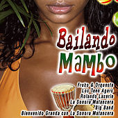Play & Download Bailando Mambo by Various Artists | Napster