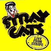 Play & Download Live In Europe - Bonn 7/29/04 by Stray Cats | Napster