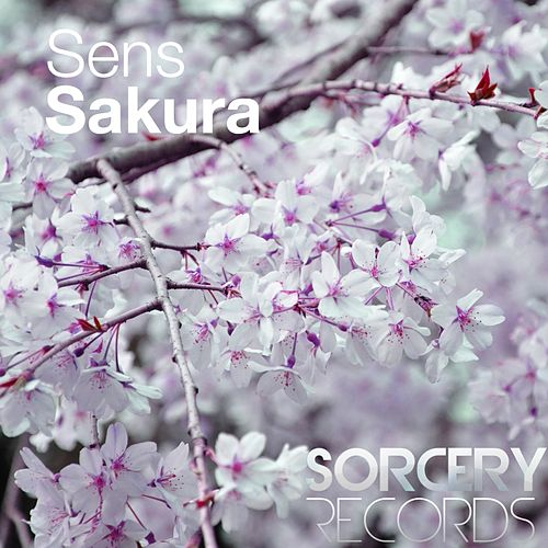 Play & Download Sakura by S.E.N.S. | Napster