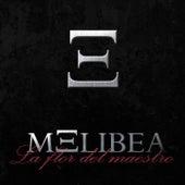 La flor del maestro de Melibea