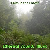 Play & Download Calm in the Forest by Ethereal Sounds Music | Napster