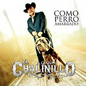 Play & Download Como Perro Amarrado by El Chalinillo | Napster