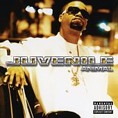 Play & Download Animal by Juvenile | Napster