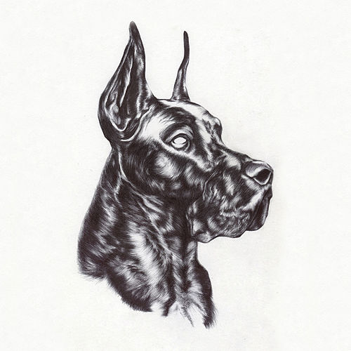 Play & Download Alpha Dog by Great Dane   Napster
