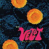 Marigolds by The Veldt
