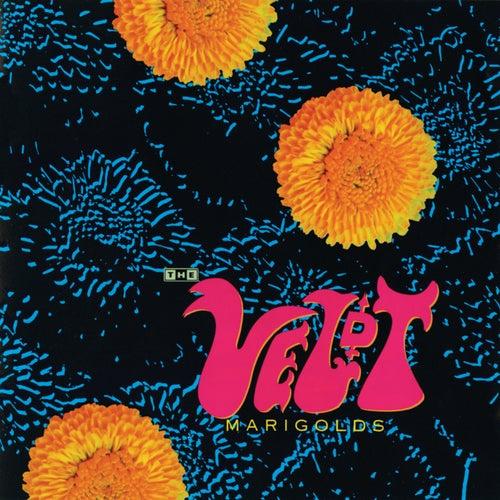 Marigolds by The Veldt
