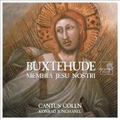 Play & Download Buxtehude: Membra Jesu Nostri by Cantus Cölln and Konrad Junghänel | Napster