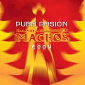 Play & Download Pura pasión by Banda Machos | Napster