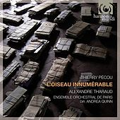 Play & Download Pécou: L'oiseau innumérable by Various Artists | Napster