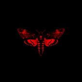 Play & Download I Am Not A Human Being II by Lil Wayne | Napster