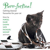 Purr-fection! Calming Classical Favourites For Your cat by Various Artists