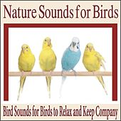 Nature Sounds for Birds: Bird Sounds for Birds to Relax and Keep Company by Robbins Island Music Group