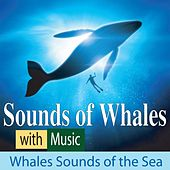 Sounds of Whales With Music: Whale Sounds of the Sea by Robbins Island Music Group