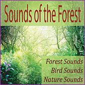 Sounds of the Forest: Forest Sounds, Bird Sounds, Nature Sounds by Robbins Island Music Group