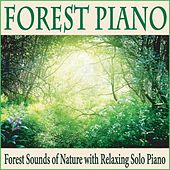 Forest Piano: Forest Sounds of Nature With Relaxing Solo Piano by Robbins Island Music Group