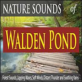 Nature Sounds of Walden Pond: Forest Sounds, Lapping Waves, Soft Winds, Distant Thunder and Soothing Rains by Robbins Island Music Group