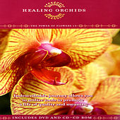Healing Orchids - The Power Of Flowers 13 by David & The High Spirit