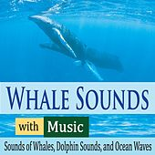 Whale Sounds With Music: Sounds of Whales, Dolphin Sounds, And Ocean Waves by Robbins Island Music Group