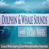 Dolphin & Whale Sounds With Ocean Waves: Sounds of Whales, Dolphins, & Ocean Waves With Soothing Ambiant Music by Robbins Island Music Group