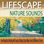 Lifescape Nature Sounds: Pure Relaxation & Healing With Sounds of Nature, Ocean Waves, Forest & Wilderness Streams by Robbins Island Music Group