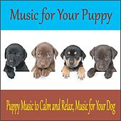 Music for Your Puppy: Puppy Music to Calm and Relax, Music for Your Dog by Robbins Island Music Group