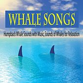 Whale Songs: Humpback Whale Sounds With Music, Sounds of Whales for Relaxation by Robbins Island Music Group