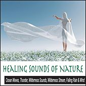 Healing Sounds of Nature: Ocean Waves, Thunder, Wilderness Sounds, Wilderness Stream, Falling Rain & Wind by Robbins Island Music Group