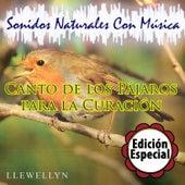 Canto de los Pájaros para la Curación: Sonidos Naturales Con Música: Edición Especial by Llewellyn