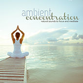 AMBIENT CONCENTRATION Natural Sounds to Focus and Meditate by Various Artists