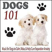 Dogs 101: Music for Dogs to Calm, Relax, & Help Cure Separation Anxiety by Robbins Island Music Group