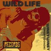 Winey Winey Sperm Donor by Wild Life