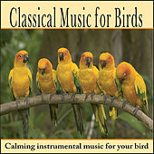Classical Music for Birds:  Bird Music for Cockatoo, Parrot, Parakeet, Cockatiel, Songbirds, and more by Robbins Island Music Group