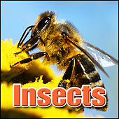 Insects: Sound Effects by Sound Effects Library