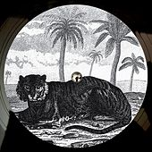Try the Impossible EP by Tigerskin
