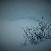 Snow by Allison Crowe