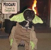Travel Is Dangerous de Mogwai