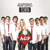 Torn de Agapornis