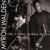 Like A Flower Seeking The Sun by Myron Walden