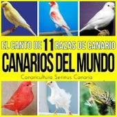Canarios del Mundo. El Canto de 11 Razas de Canario. Ruso, Timbrado, Roller, Silvestre, Flauta, Malinois y Mas... de Various Artists