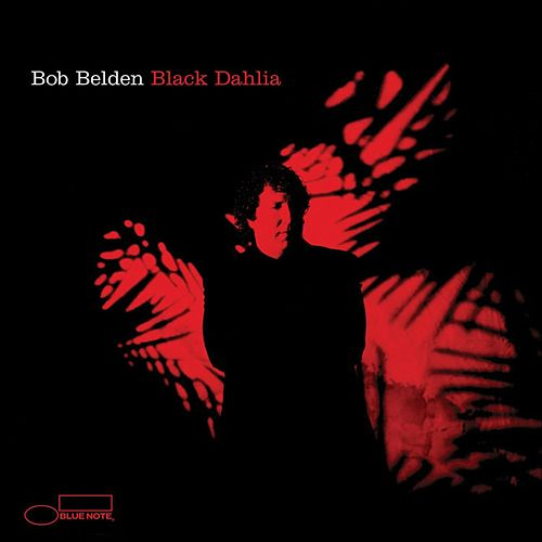Black Dahlia by Bob Belden