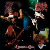 Entangled in Chaos de Morbid Angel