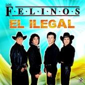 El Ilegal by Felinos