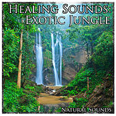 Healing Sounds: Exotic Jungle by Natural Sounds