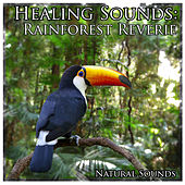 Healing Sounds: Rainforest Reverie by Natural Sounds