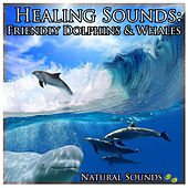 Healing Sounds: Friendly Dolphins & Whales by Natural Sounds