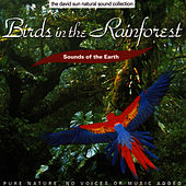Birds In The Rainforest by Sounds Of The Earth
