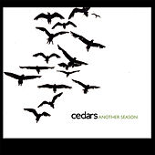 Another Season by Cedars